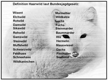 Teilkasko Haarwild Definition
